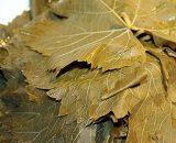 Asma Yaprağı Salamurası
